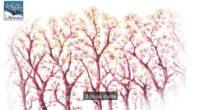 L'homme qui plantait des arbres - Annonce